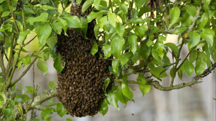 Un american a murit după ce a fost atacat de un roi imens de albine. Stupul uriaș cântărea aproximativ 50 de kilograme