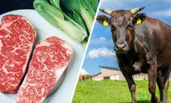 FOTO Prima bucată de carne de vacă japoneză prin 3D! Un kilogram de cea tradițională costă peste 300 de euro