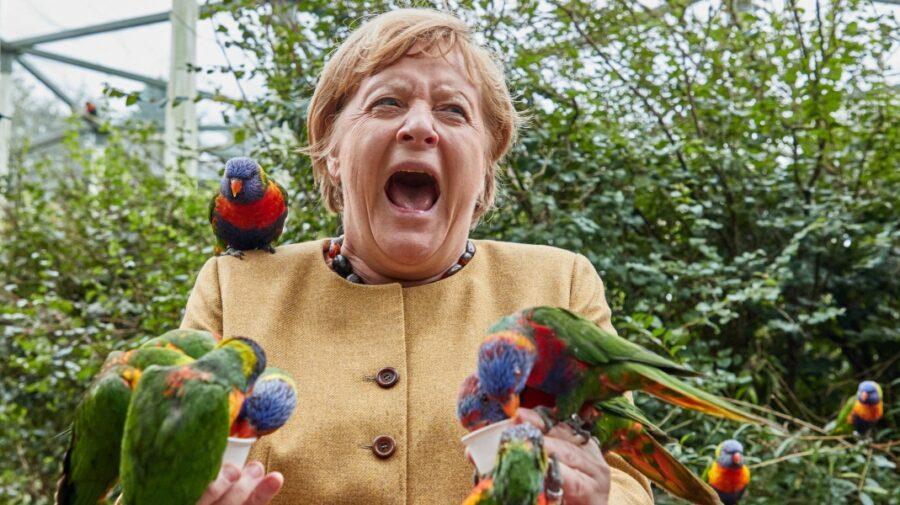 Imaginea zilei! Angela Merkel, ciupită de papagali, în timpul unei vizite la parcul de păsări din Marlow
