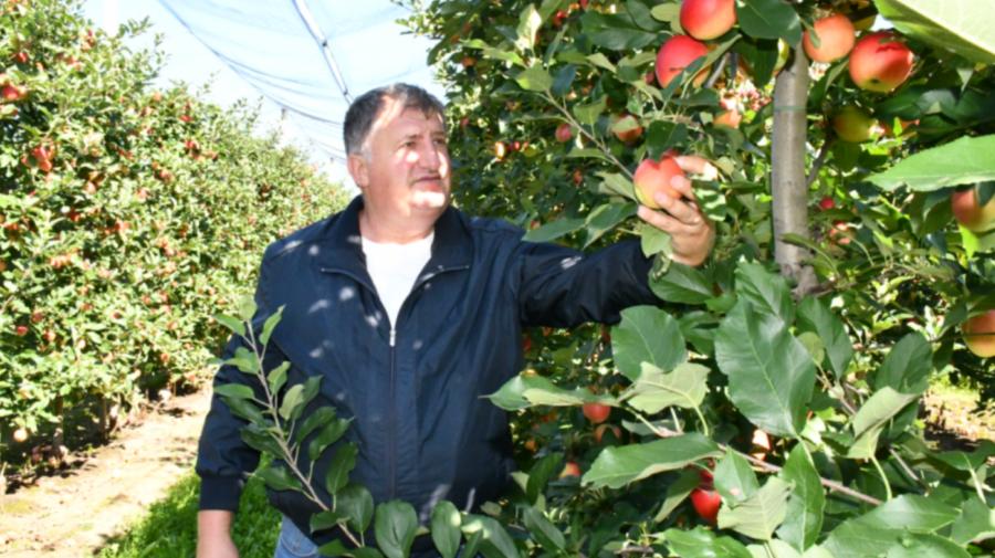 Vitalie Ababii, agricultor: Ce fel de afacere fără greutăţi. Cum e să ai o livadă superintensivă în Republica Moldova