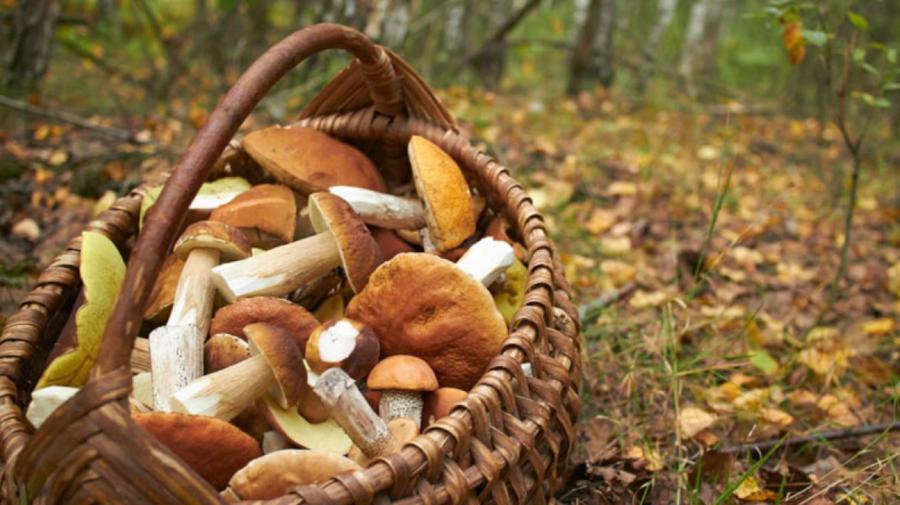 Specialiștii atenționează! Cazurile de intoxicație cu ciuperci sunt în creștere