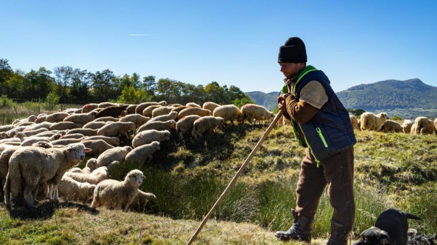 VIDEO Suport financiar pentru fermierii din sectorul zootehnic. Bugetul proiectului constituie 265 de mii de dolari