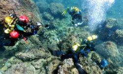 FOTO Ca în filme! Doi scafandri amatori au descoperit aur, în timp ce strângeau gunoaie de pe fundul mării