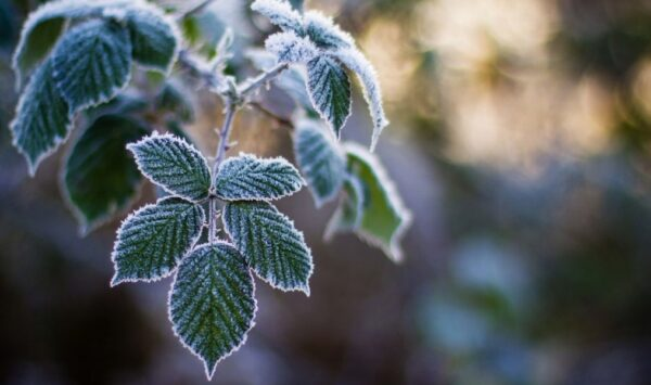 Meteorologii moldoveni au prognozat primele înghețuri pentru această toamnă. A fost emis Cod Galben!