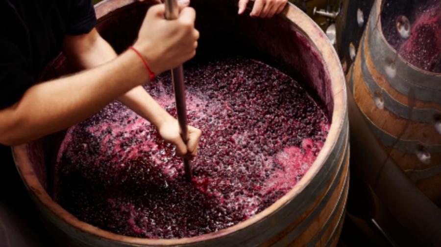ATENȚIE la procesul de fermentare a vinului! Recomandările specialiștilor