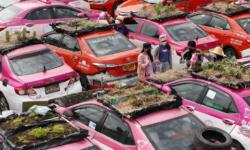 """FOTO Impresionant! O companie de taxi a transformat mașinile în """"grădini"""". Pe acoperiș cresc legume, dar și flori"""