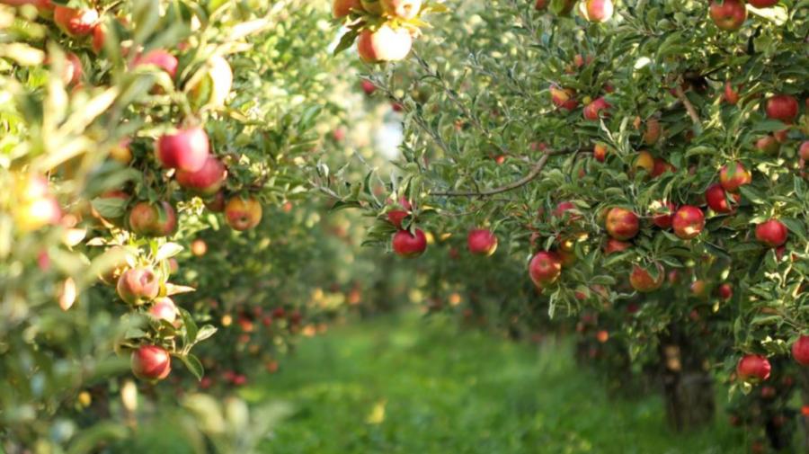 """Proiectul """"Livada Moldovei"""", extins până în luna mai 2023. Agricultorii vor putea accesa împrumuturi avantajoase"""