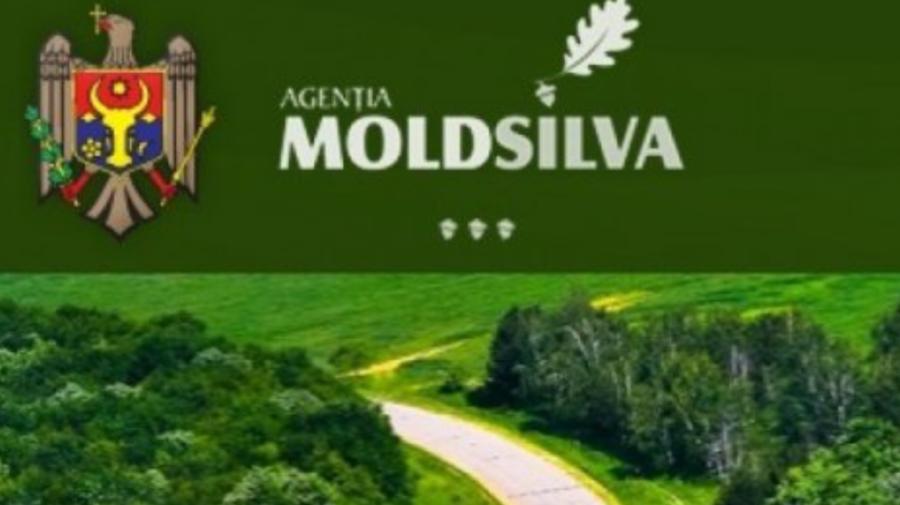 """""""Moldsilva"""" s-a autosesizat! De urgență, un grup de lucru va realiza o anchetă privind cazul de braconaj de la Sîngerei"""