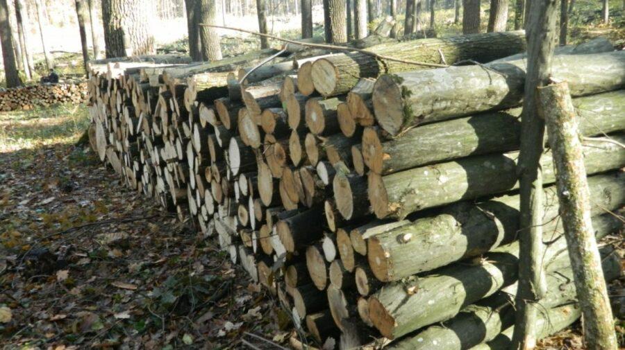"""Agenţia """"Moldsilva"""" propune lemne de foc populaţiei, fără a majora preţurile"""